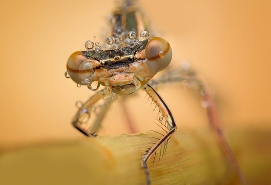 I SHOT IT : Macro Photo Competition 2016 No 2 : Results